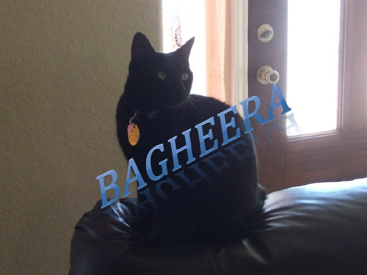 Air Bagheera - The Story of a Cat
