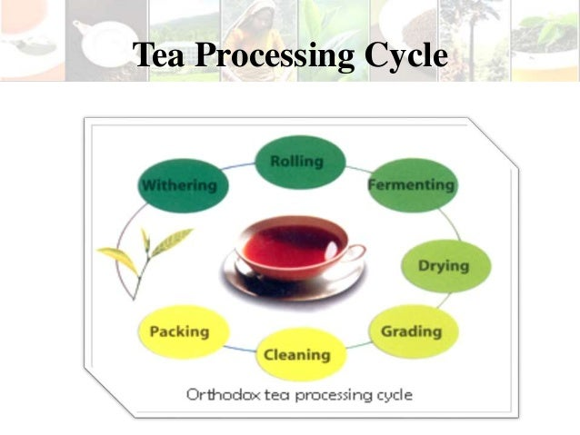 product lifecycle of tea About tea contacts tips search product lifecycle quality assurance/ control solutions where you can use latest laser technologies to provide an accurate.