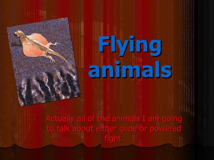 Flying           animalsActually all of the animals I am goingto talk about either glide or powered                  fight.