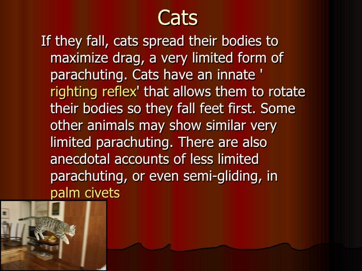 Cats Righting Reflex Cats Have an Innate Righting