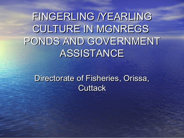 FINGERLING /YEARLINGFINGERLING /YEARLING CULTURE IN MGNREGSCULTURE IN MGNREGS PONDS AND GOVERNMENTPONDS AND GOVERNMENT ASS...