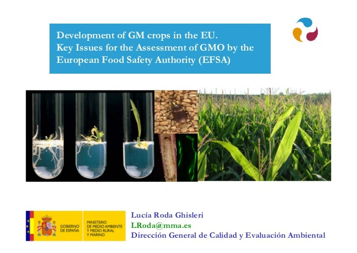 Lucía Roda Ghisleri - Development of GM crops in the EU. Key Issues for the Assessment of GMO by the European Food Safety Authority (EFSA)