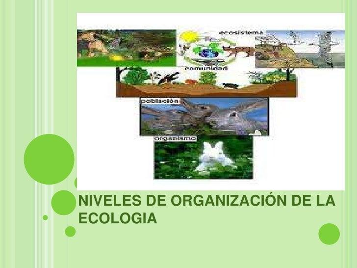 NIVELES DE ORGANIZACIÓN DE LAECOLOGIA