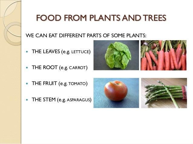 Parts of Plants we Eat we Can Eat Different Parts of