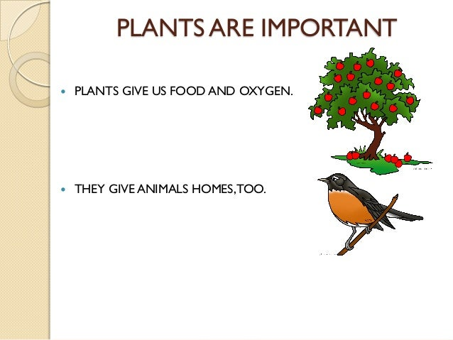 Why are plants important?