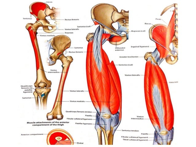 Ppt slides anatomy