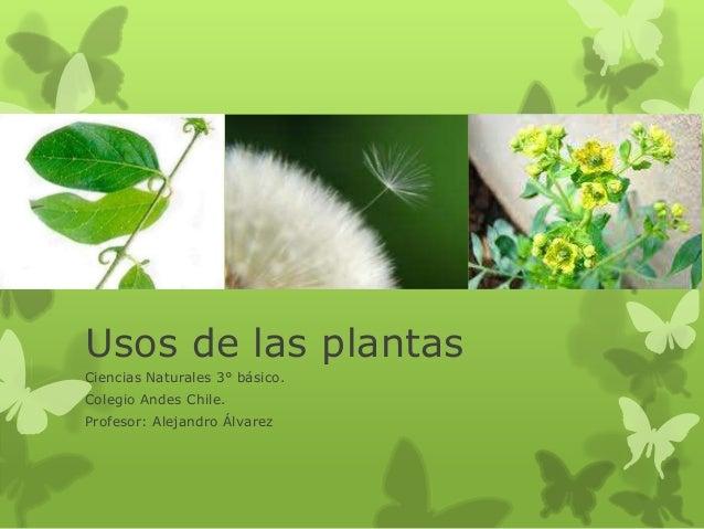 Ppt usos de las plantas 3 for Clasificacion de las plantas ornamentales