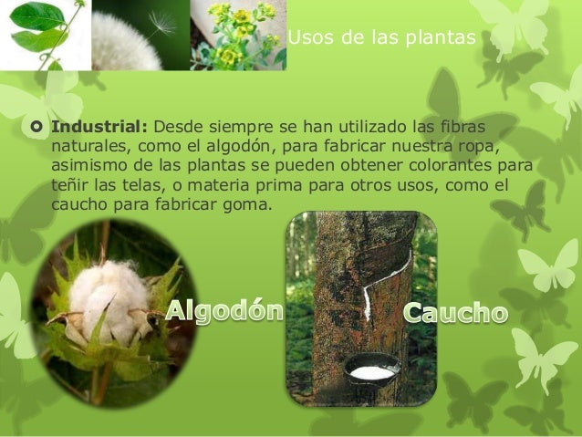 Ppt usos de las plantas 3 for Para que se utilizan las plantas ornamentales