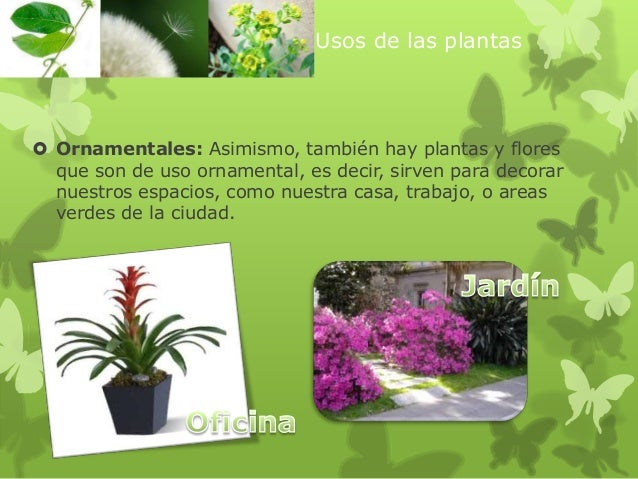 ppt usos de las plantas 3