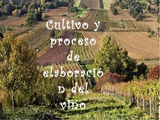 Cultivo y proceso de elaboració n del vino