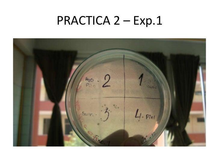 Practica 2 exp