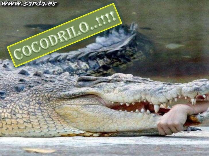 COCODRILO..!!!!<br />