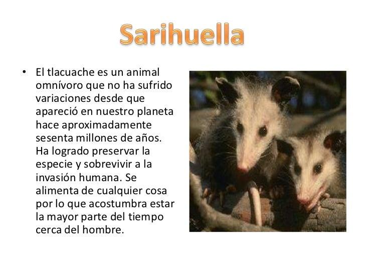 Sarihuella for Pececillo nuevo de cualquier especie