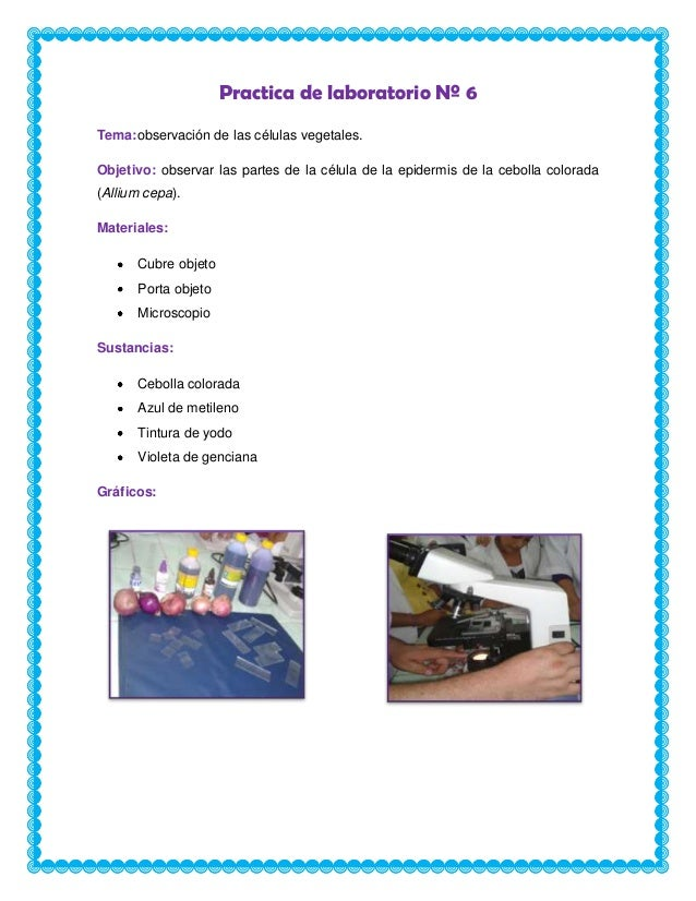 Practica de laboratorio Nº 6 Tema:observación de las células vegetales. Objetivo: observar las partes de la célula de la e...
