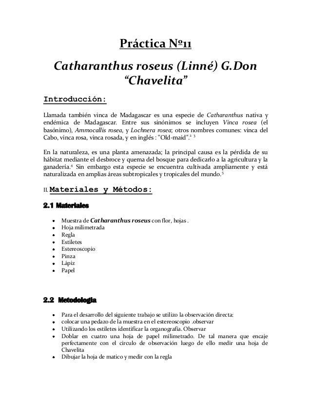"""Práctica Nº11   Catharanthus roseus (Linné) G.Don             """"Chavelita""""Introducción:Llamada también vinca de Madagascar ..."""