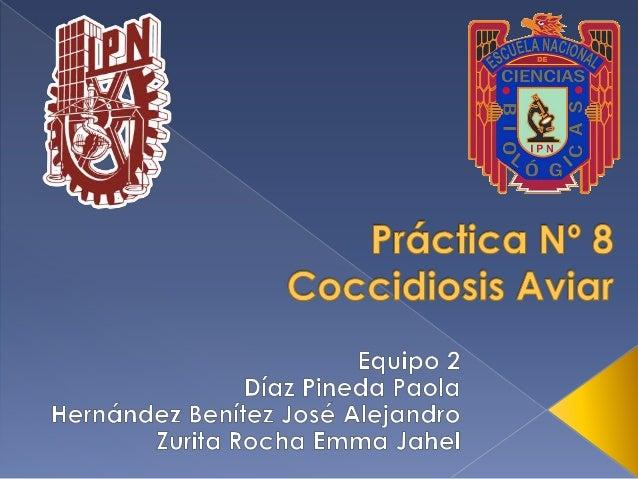 Enfermedad parasitaria causada por protozoarios del Phylum Apicomplexa, familia Eimeriidae. Los géneros Eimeria spp. e Iso...