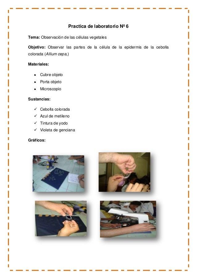Practica de laboratorio Nº 6 Tema: Observación de las células vegetales Objetivo: Observar las partes de la célula de la e...