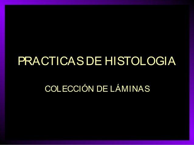 PRACTICAS DE HISTOLOGIA COLECCIÓN DE LÁMINAS