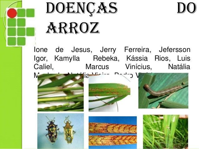 Doenças Arroz  do  Ione de Jesus, Jerry Ferreira, Jefersson Igor, Kamylla Rebeka, Kássia Rios, Luis Caliel, Marcus Viníciu...