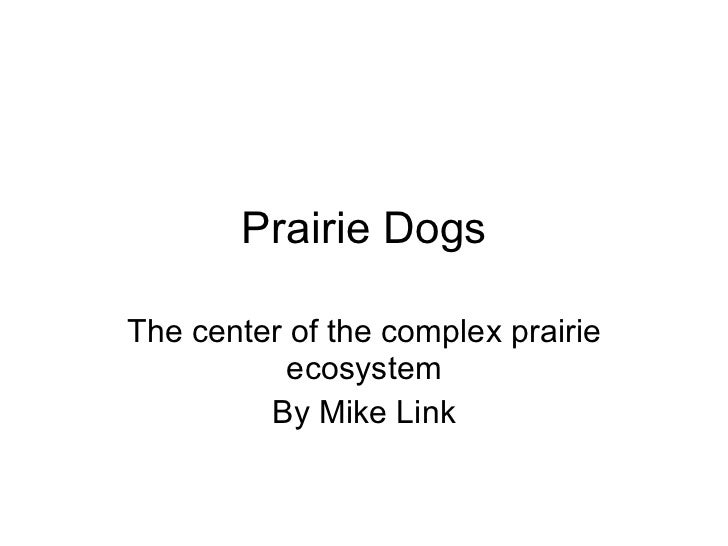 Prairie Dogs The center of the complex prairie ecosystem By Mike Link
