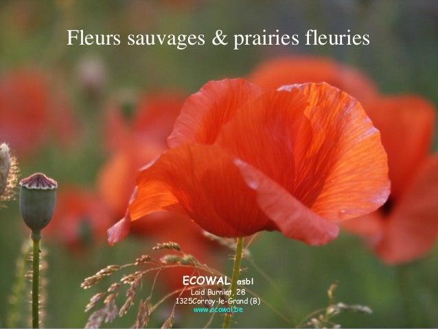 Fleurs sauvages & prairies fleuries ECOWAL asbl Laid Burniat, 28 1325Corroy-le-Grand (B) www.ecowal.be