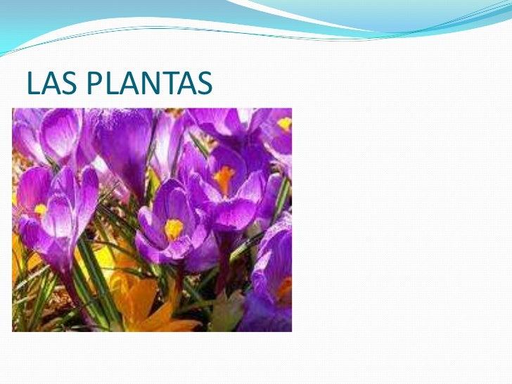 Plantas Criptògamas