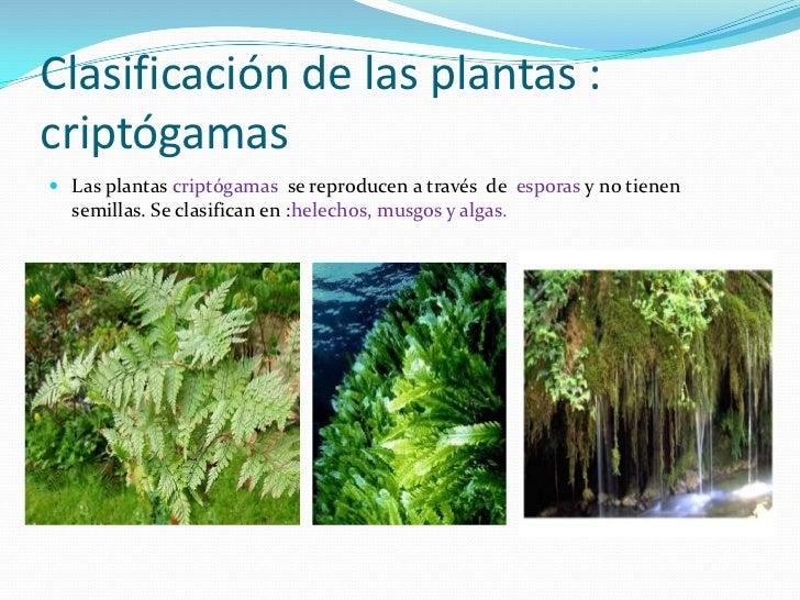 Plantas cript gamas for Que son plantas ornamentales ejemplos