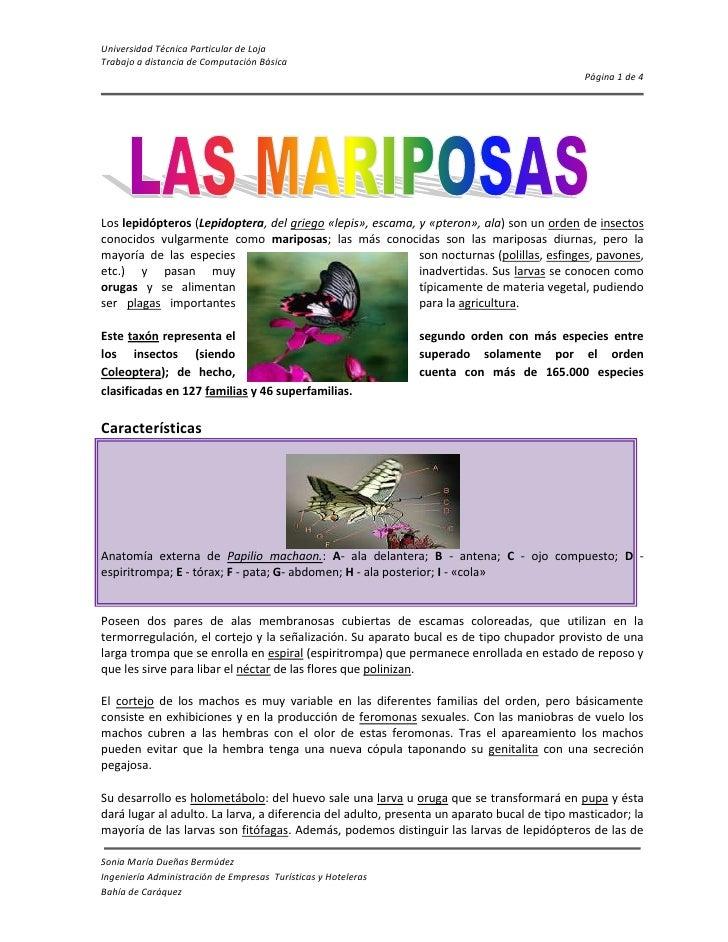 1567180398145Los lepidópteros (Lepidoptera, del griego «lepis», escama, y «pteron», ala) son un orden de insectos conocido...