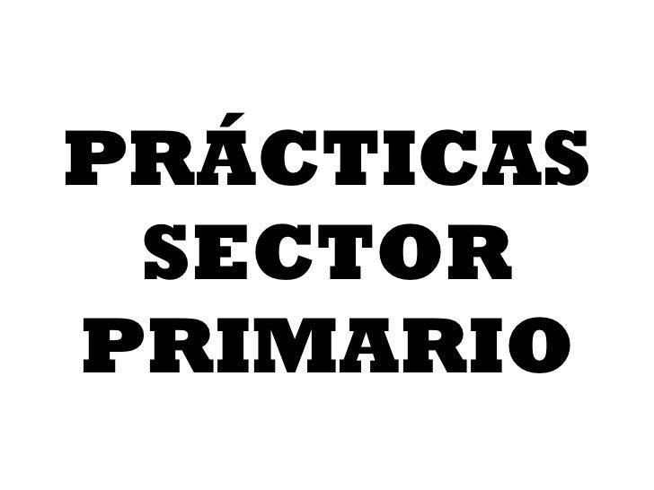 PRÁCTICAS SECTOR PRIMARIO