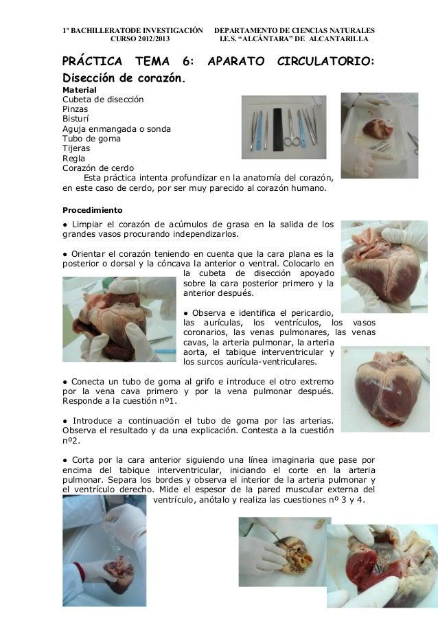 Práctica tema 6 aparato circulatorio corazon
