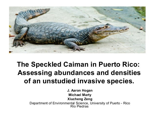 The Speckled Caiman in Puerto Rico: Assessing abundances and densities of an unstudied invasive species. J. Aaron Hogan Mi...