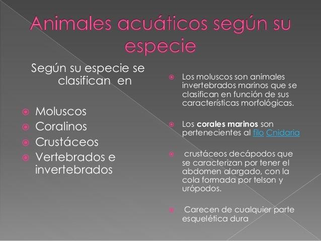 Según su especie se clasifican en  Moluscos  Coralinos  Crustáceos  Vertebrados e invertebrados  Los moluscos son ani...