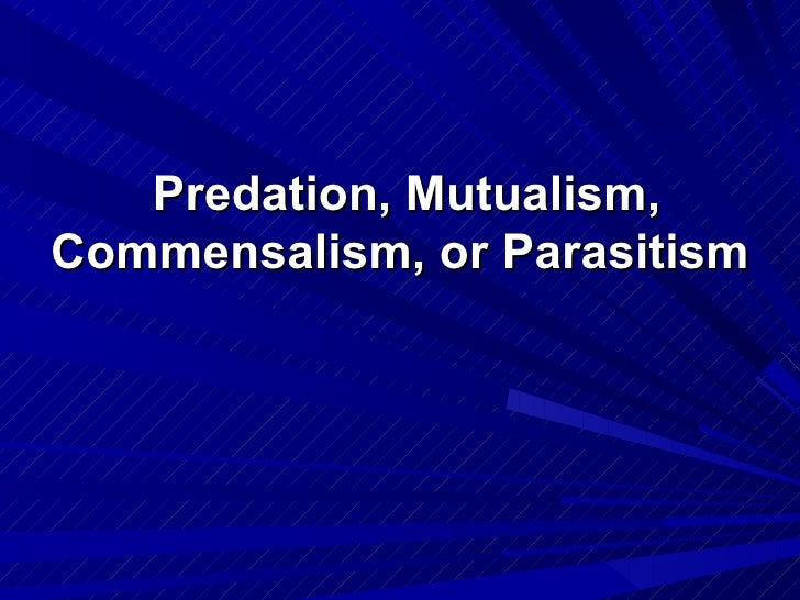 competition and mutualism The difference between mutualism and commensalism is that mutualism is a relationship between two species in which both species benefit and commensalism is a relationship between two organisms in which one organism benefits and the other is unnaffected.