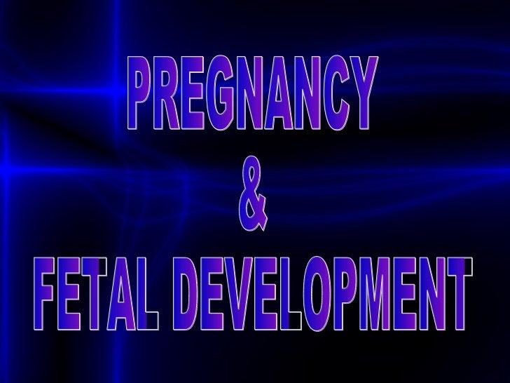 Fetal Skull Development Pregnancy Fetal Development