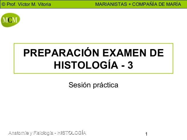 © Prof. Víctor M. Vitoria  MARIANISTAS + COMPAÑÍA DE MARÍA  PREPARACIÓN EXAMEN DE HISTOLOGÍA - 3 Sesión práctica  Anatomía...