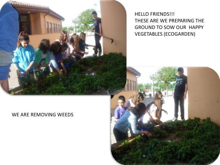 HELLO FRIENDS!!!                        THESE ARE WE PREPARING THE                        GROUND TO SOW OUR HAPPY         ...