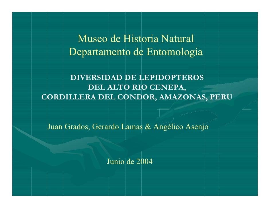 Diversidad de lepidopteros del alto rio Cenepa Cordillera del Condor, Amazonas, Peru - Ecuador
