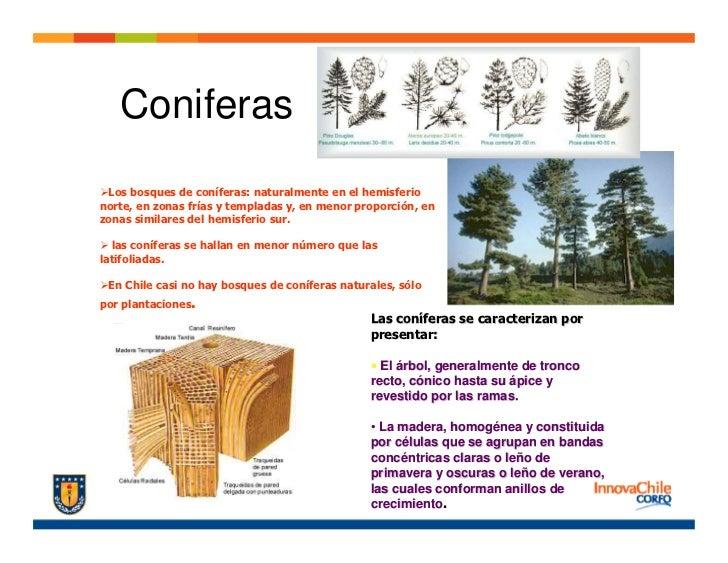 Dise o madera for Tipos de arboles y caracteristicas