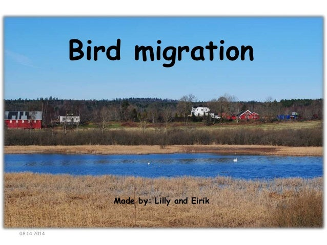 Bird migration Made by: Lilly and Eirik 08.04.2014