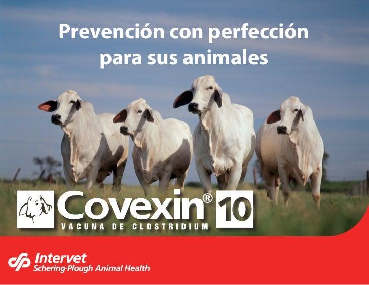 Prevención con perfección    para sus animales