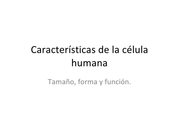 Características de la célula humana Tamaño, forma y función.