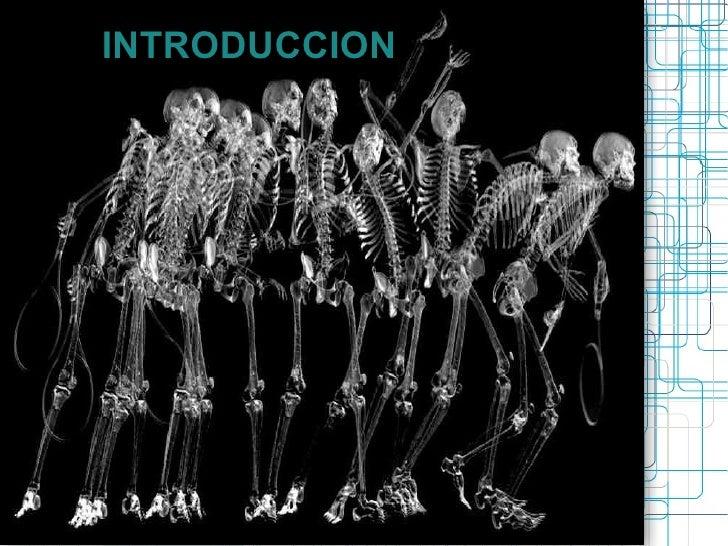 Anatomia de Columna y Pelvis. Introduccion