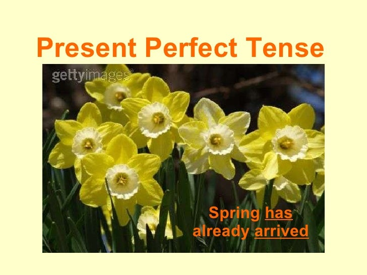 Present Perfect Tense The spring  has  already  arrived