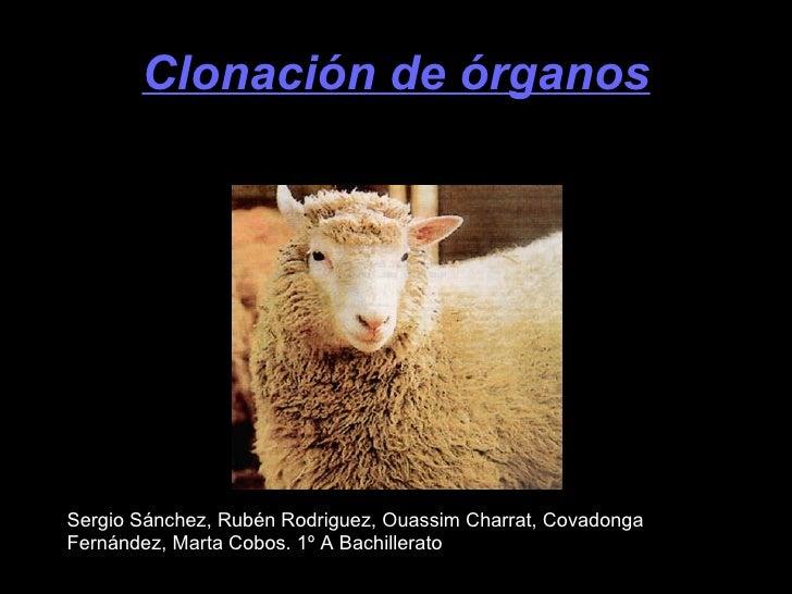 Clonación de órganos Sergio Sánchez, Rubén Rodriguez, Ouassim Charrat, Covadonga Fernández, Marta Cobos. 1º A Bachillerato