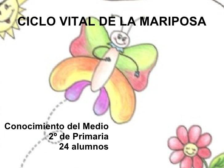 CICLO VITAL DE LA MARIPOSA Conocimiento del Medio 2º de Primaria 24 alumnos