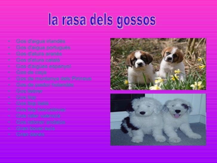 <ul><li>Gos d'aigua irlandès   </li></ul><ul><li>Gos d'aigua portuguès   </li></ul><ul><li>Gos d'atura aranès   </li></ul>...