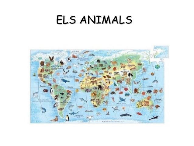 Presentació animals