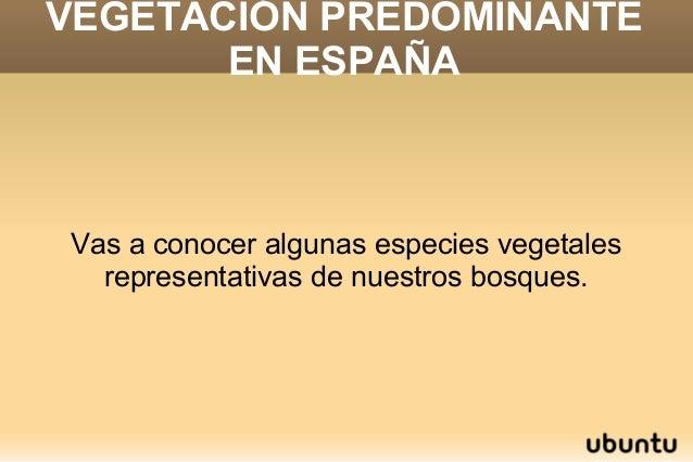 VEGETACIÓN PREDOMINANTE EN ESPAÑA Vas a conocer algunas especies vegetales representativas de nuestros bosques.