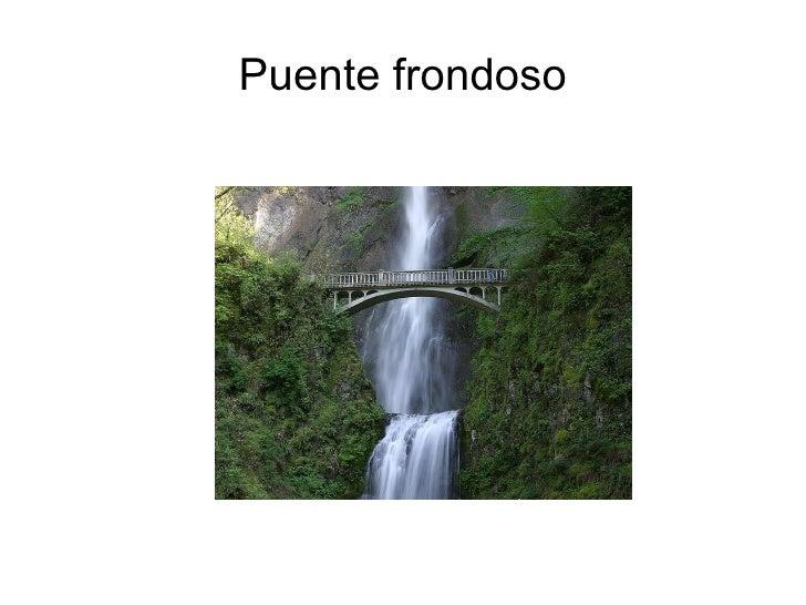 Puente frondoso