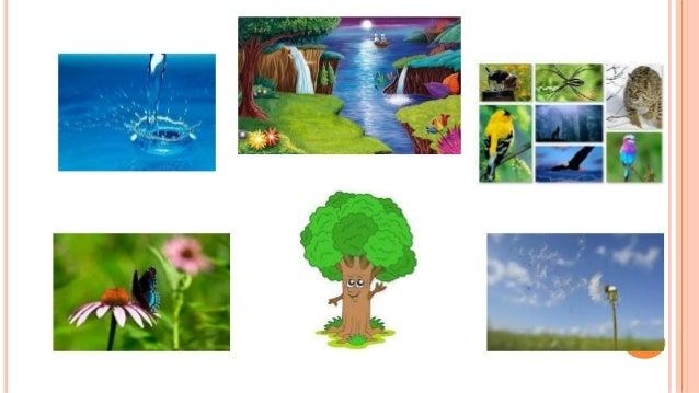 Presentaci n de medio ambiente for Que elementos conforman el suelo